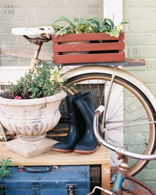 Vintage bicycles, rubber boots and planters