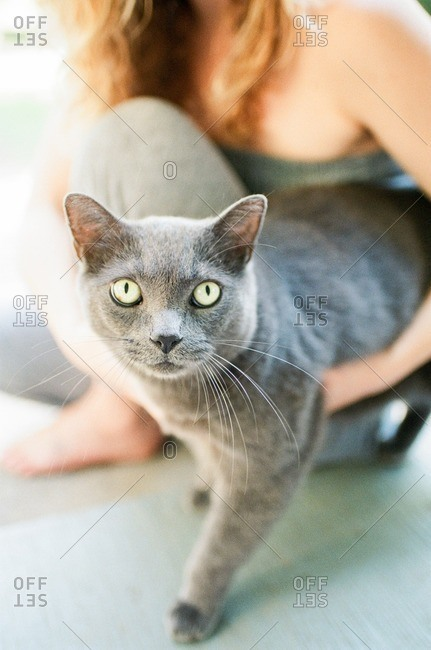 Woman holding a furry gray cat