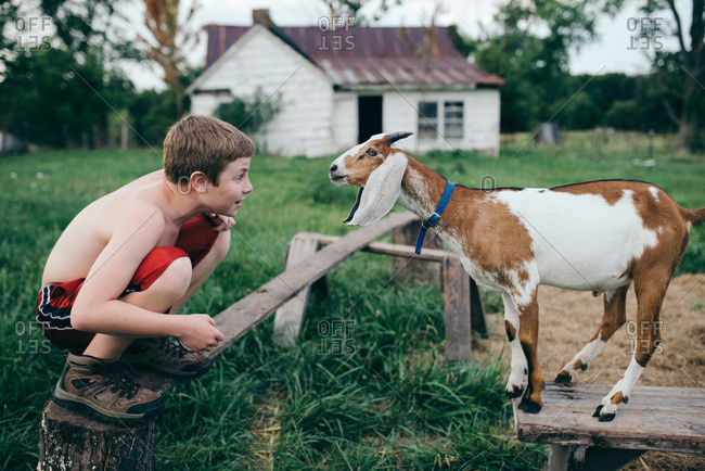 Young boy playing with pet goat