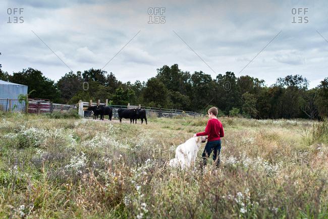 Boy walking with dog in cattle field