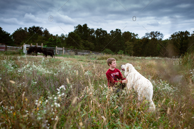 Boy playing with dog in cattle field