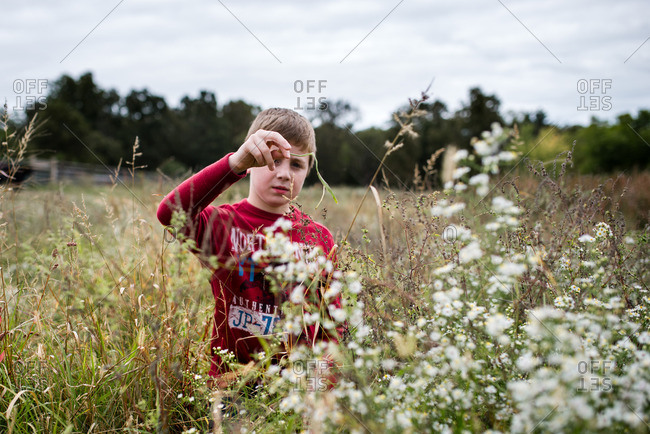 Boy checking out plants in field of tall grass