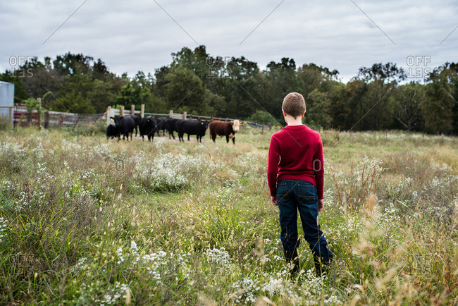 Boy watches cattle in field