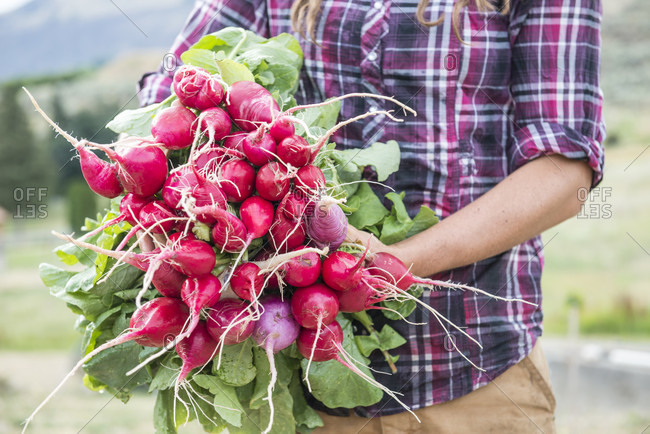 A woman holds freshly harvested radishes on an organic farm in Washington State