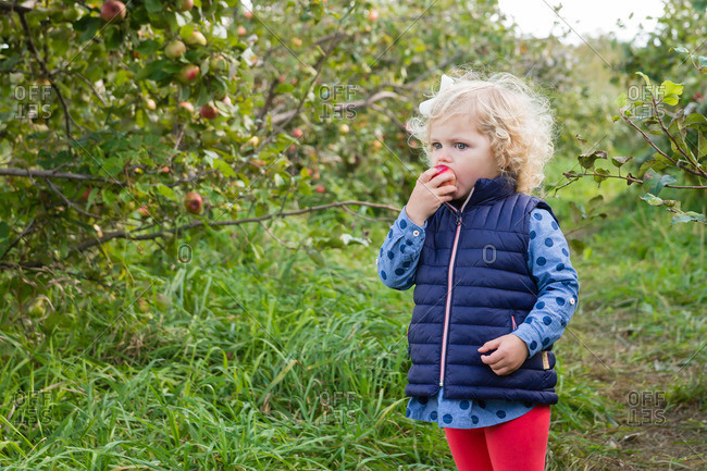 Young girl eating an apple in orchard