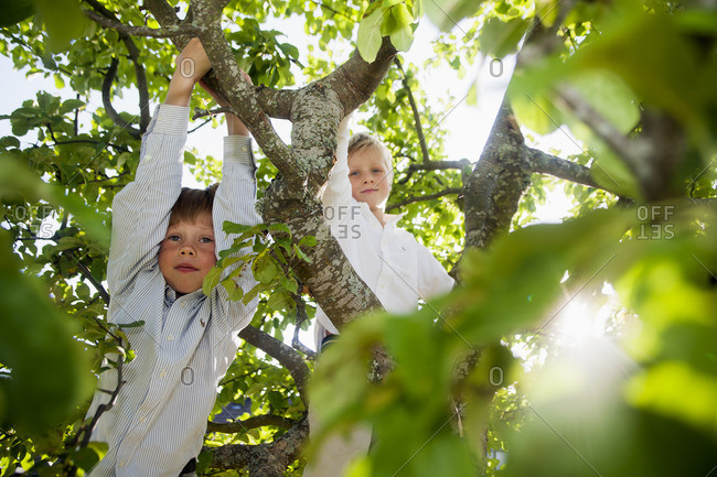 Sweden, Boys wearing shirts in tree