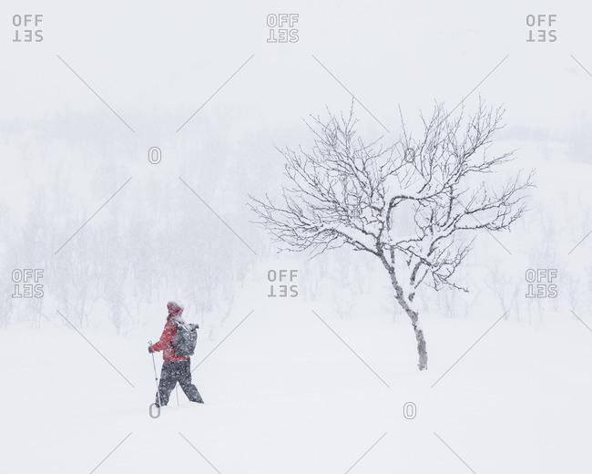 Sweden, Lapland, Riksgransen, Woman walking through snow with hiking poles