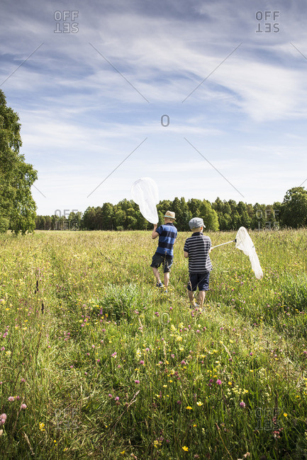 Sweden, Gotland, Boys with butterfly nets in meadow with forest on horizon