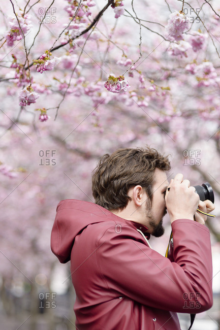 Sweden, Stockholm, Kungstradgarden, Young man taking pictures under blooming trees