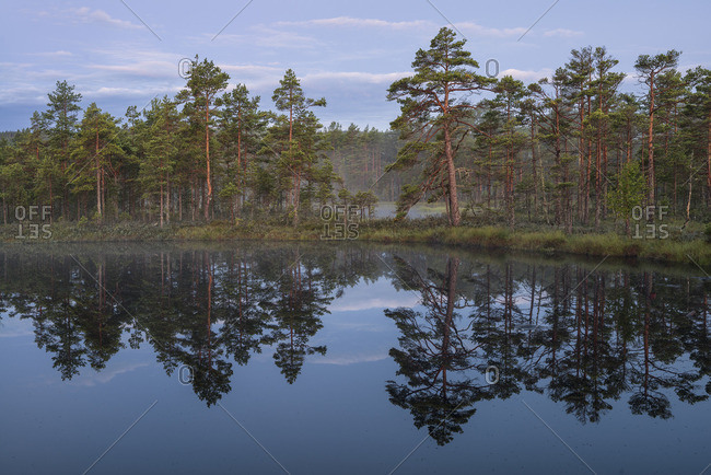 Sweden, Narke, Scenic view of lake by forest