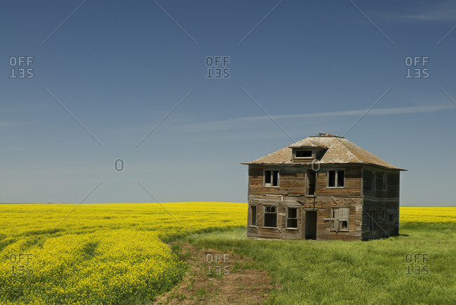 Abandoned farmhouse and canola field near Leader, Saskatchewan, Canada