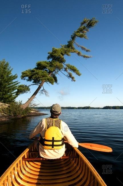 Man, Canoe, Pine, Kahshe Lake, Muskoka, Ontario