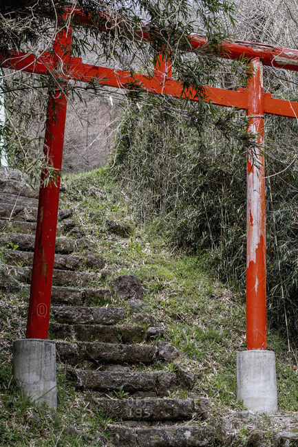 Torii Gate over steps amidst trees in forest, Hakone, Fuji-Hakone-Izu National Park, Japan