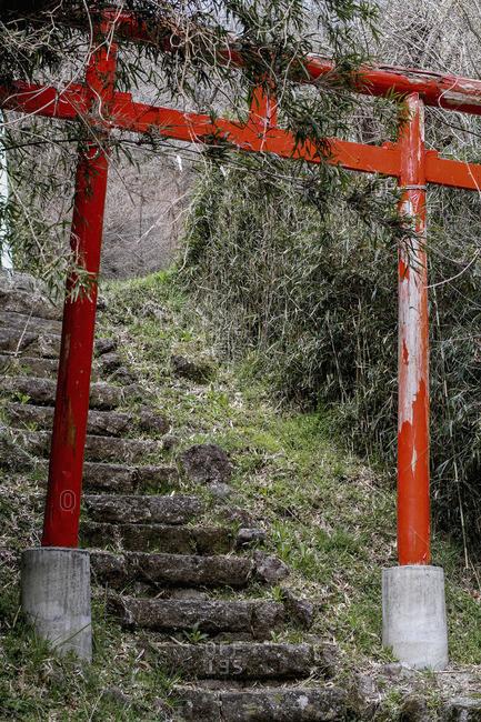 Torii Gate over steps amidst trees in forest, Hakone, Fuji-Hakone-Izu National Park, Japan