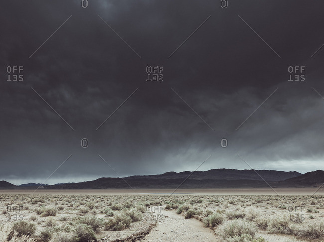 Bushes growing on landscape against cloudy sky, Death Valley Road, California, USA