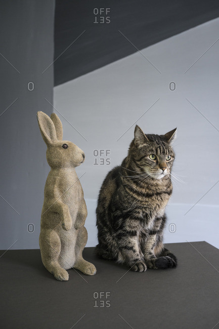 Tabby cat sitting by rabbit figurine on floor against wall
