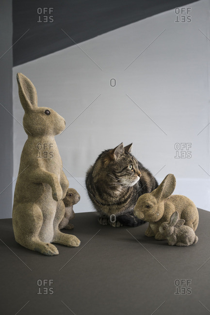 Tabby cat looking away while sitting by rabbit figurines on floor against wall