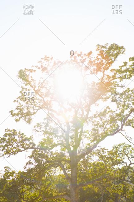 Sunlight through a leafy tree