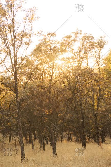 Sunlight through a tree grove