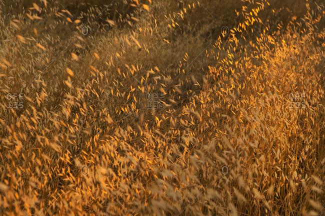 Sunlight over a grassy field