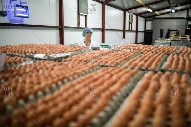 Female staff using digital tablet in egg factory