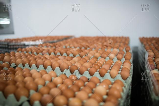 Eggs arranged on egg carton in egg factory