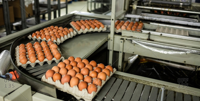 Eggs cartons moving on the production line in egg factory