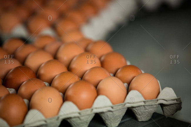 Cartons of eggs moving on the production line in factory