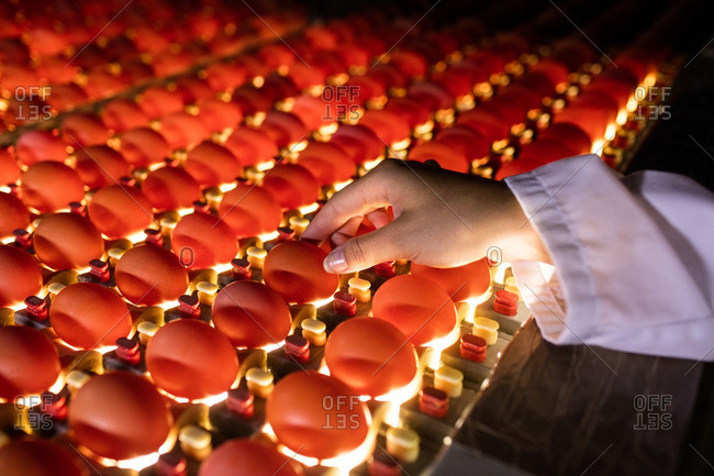 Female staff examining eggs in lighting control quality in egg factory
