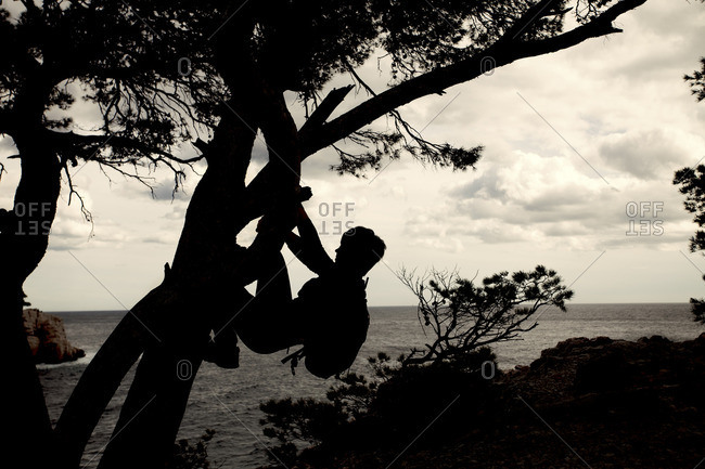 Woman climbing a tree, silhouette