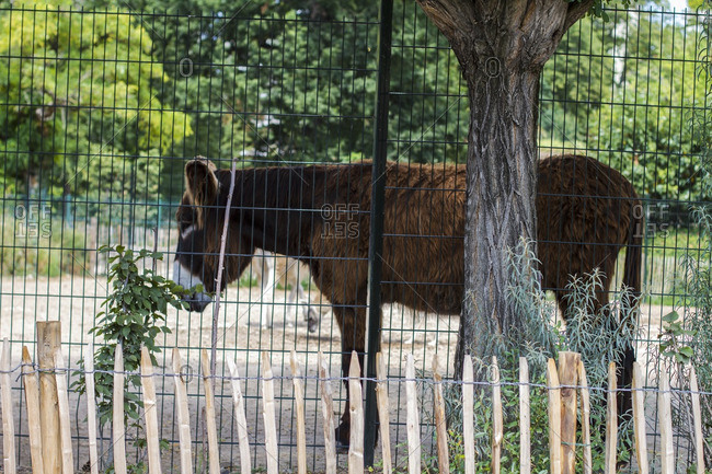 Brown donkey behind a fence in France