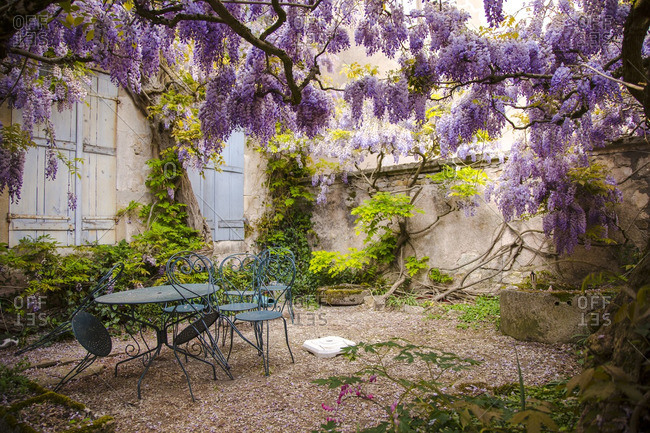 Courtyard filled with wisteria in Avallon, France