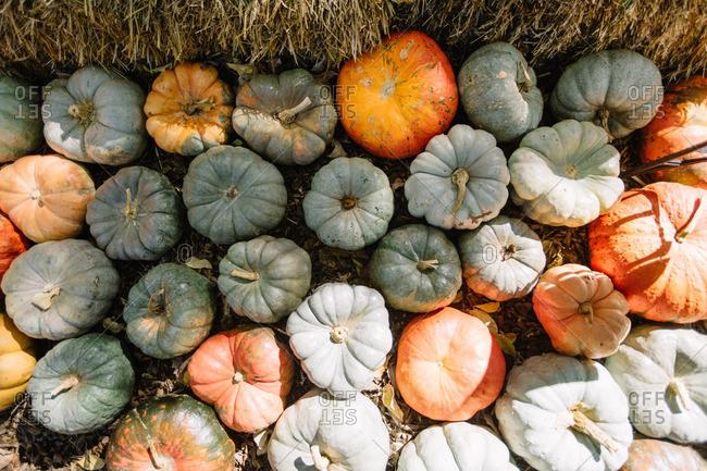 Abundance of pumpkins by a hay stack