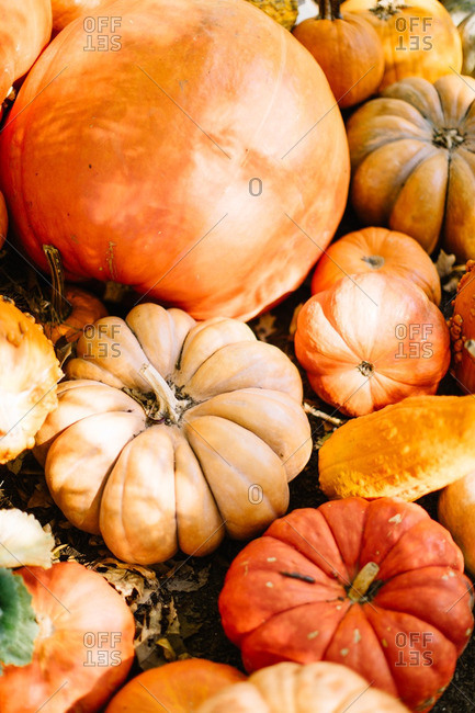 Overhead view of orange pumpkins in a pile