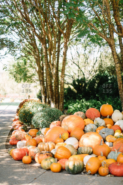 Variety of pumpkins in a pile lining a sidewalk