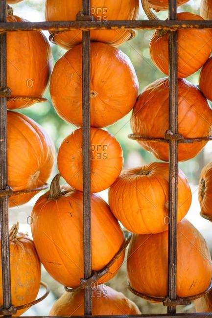 Orange pumpkins displayed on a metal holder