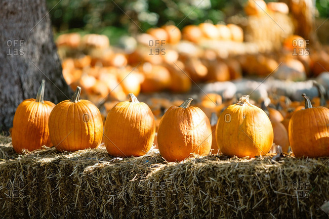 Pumpkins on a hay stack