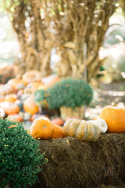 Variety of pumpkins on a hay stack