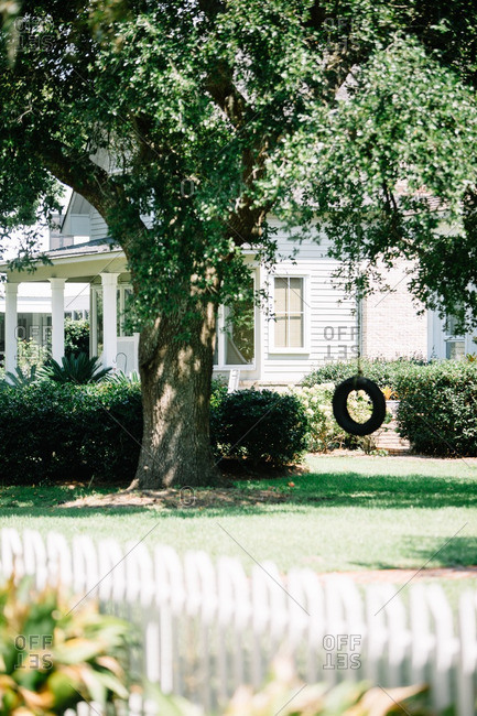 Front yard of a home with large tree and tire swing