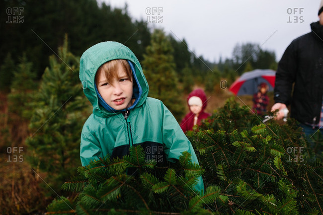 Family carrying their selected Christmas tree on a farm