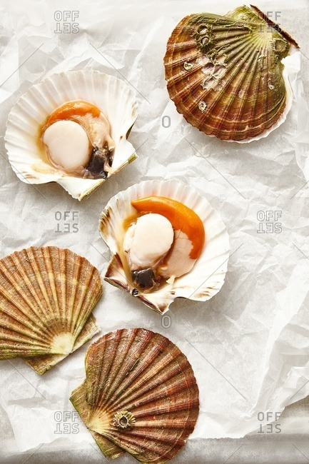 Colorful Diver Scallops opened on wax paper