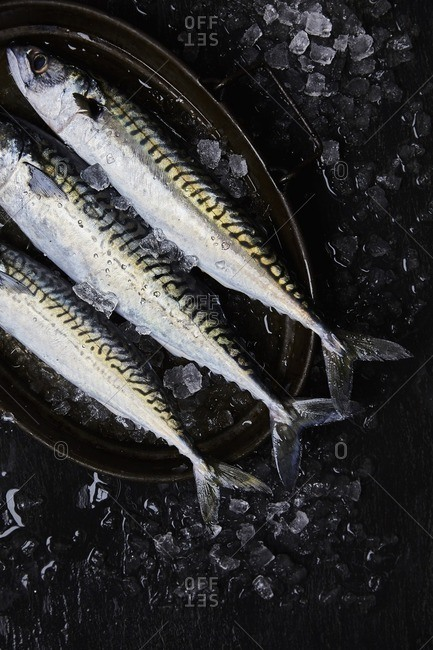 Three Mackerel prepared on crushed ice in oval shaped tray on dark slate surface