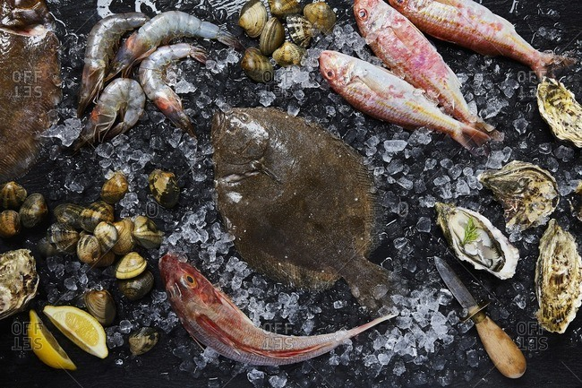 Assortment of freshly caught seafood consisting of Prawns, Gurnard, Oysters, Brill, Turbot, Red Mullet, and Clams on crushed ice with an oyster knife, lemon and dill sprigs