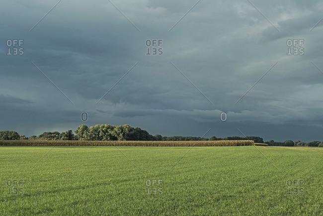 Dutch farmland with corn field and stormy sky, Achterhoek, Gelderland, The Netherlands
