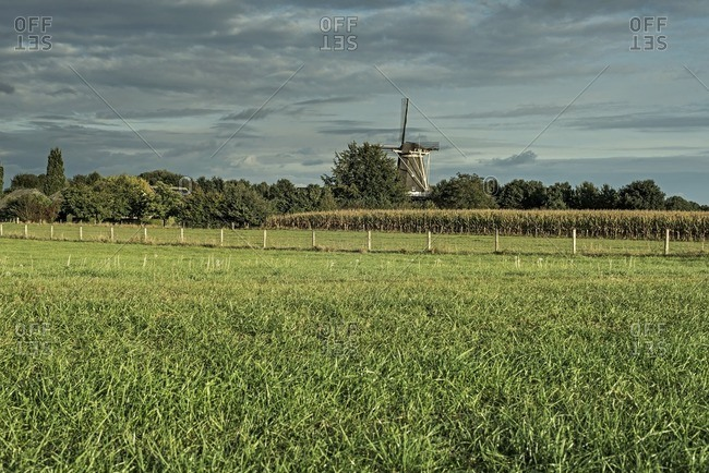 Dutch windmill over cornfield under cloudy sky, Achterhoek, Gelderland, The Netherlands