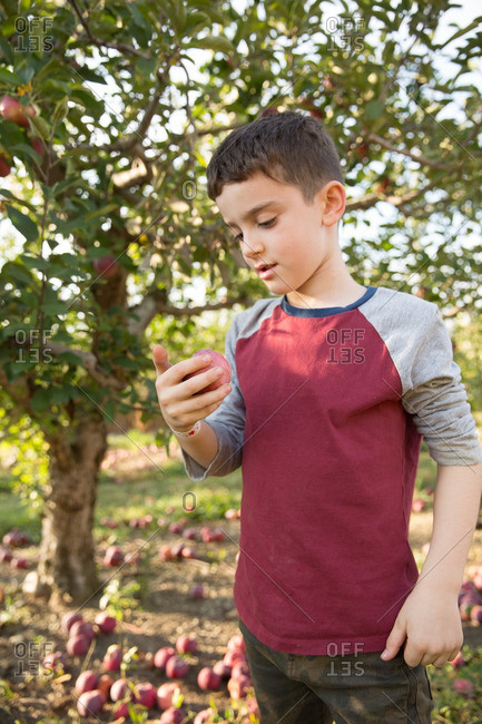 Boy with apple in hand in orchard