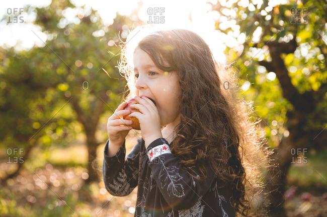 Young girl biting fresh picked apple