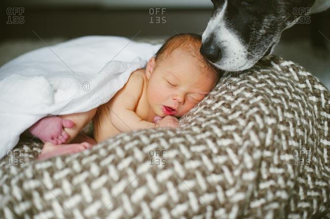 Dog's face by baby asleep on cushion