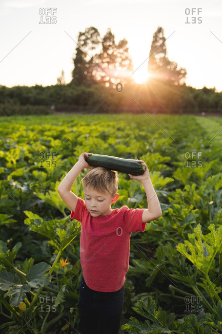 Young boy holding a freshly picked zucchini over his head and walking out of a field