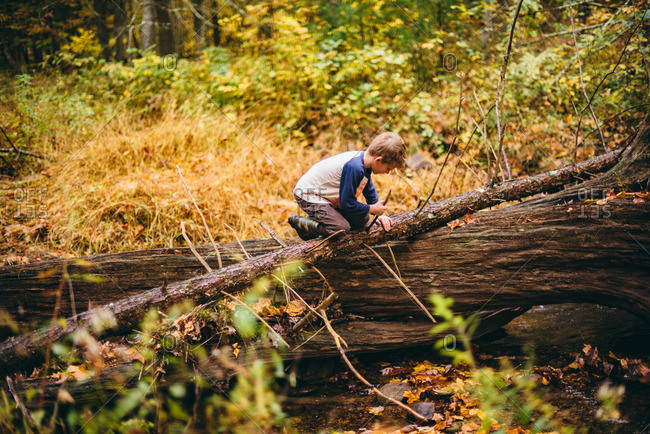 Boy breaking branch off of fallen tree in the woods
